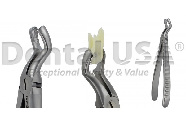 ATRAUMATIC UNVERSAL EXTRACTION FORCEP  ADULT / PEDIATRIC / CHILDREN  F6P UPPER MOLARS